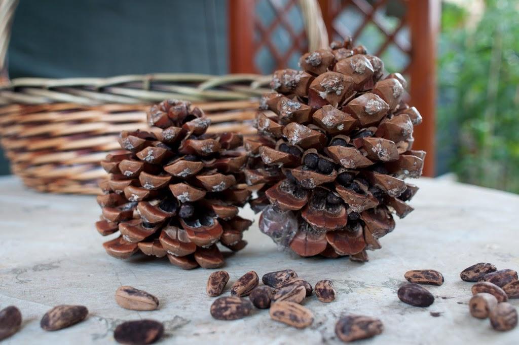 Pinoli Nuts