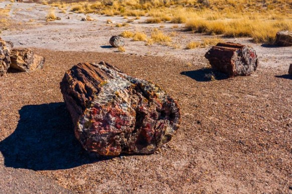 SW Parks Trip – Petrified Forest